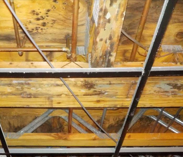 Tips on Preventing Commercial Mold Damage Before