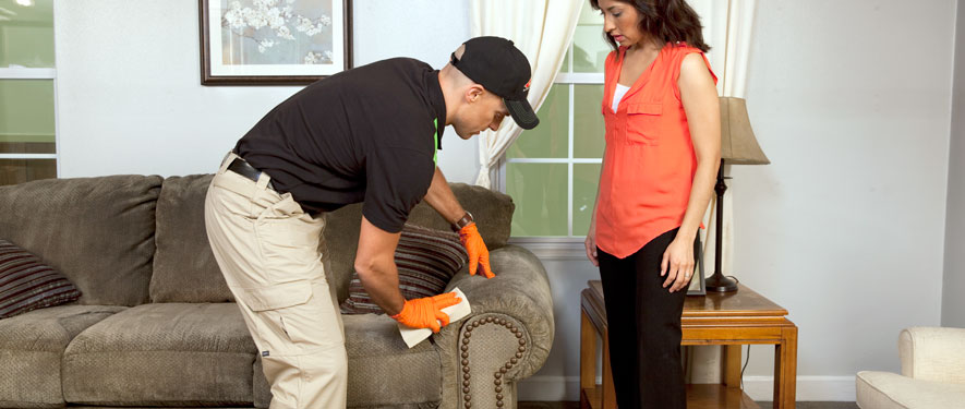 Novi, MI carpet upholstery cleaning